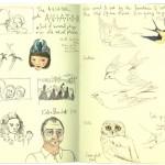 aviator-birds